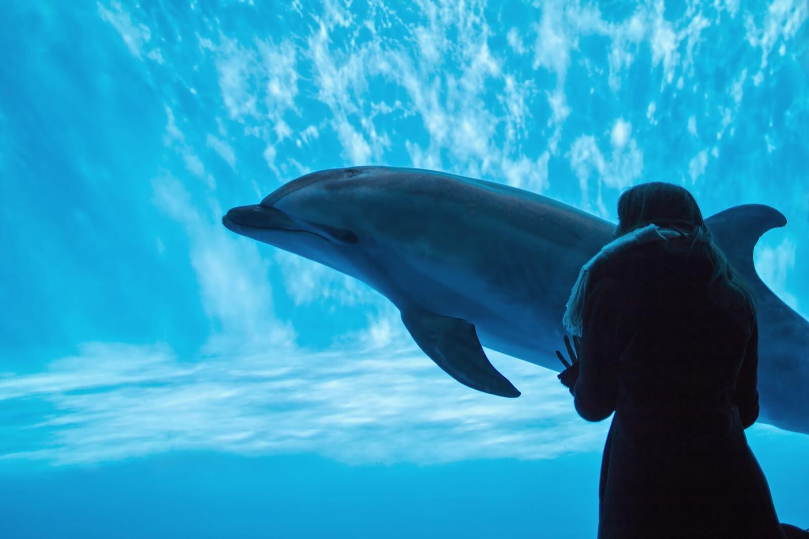 私が「水族館デート」をオススメする訳