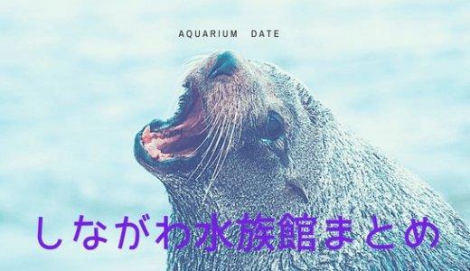 イルカもアザラシもサメも!しながわ水族館まとめ
